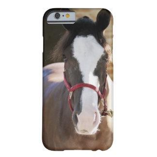 Primer de un caballo atado en un establo funda para iPhone 6 barely there