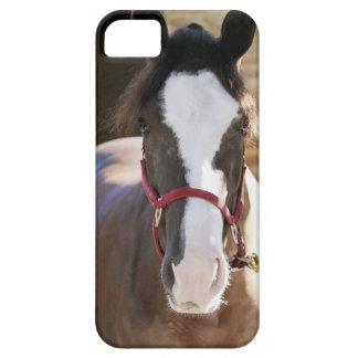 Primer de un caballo atado en un establo iPhone 5 funda