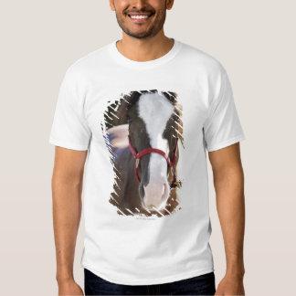 Primer de un caballo atado en un establo playera