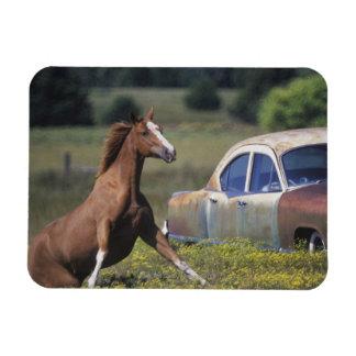 Primer de un caballo que corre cerca de un coche e imán flexible