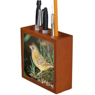 Primer de un canario del bosque (Serinus Scotops) Organizador De Escritorio