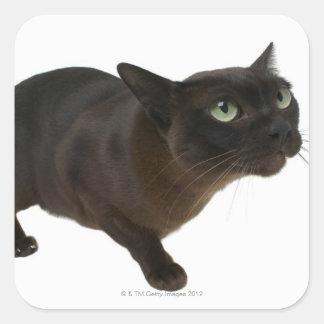 Primer de un gato 2 calcomanías cuadradass personalizadas