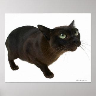 Primer de un gato 2 póster