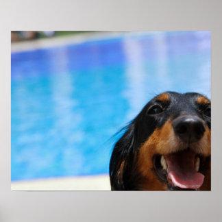 Primer de un jadeo del perro del Dachshund Impresiones