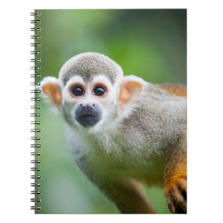 Primer de un mono de ardilla común libro de apuntes con espiral