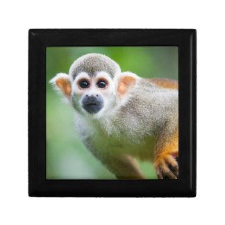 Primer de un mono de ardilla común cajas de regalo