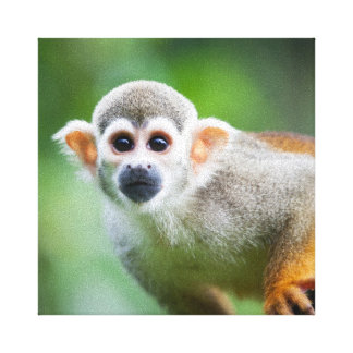 Primer de un mono de ardilla común impresión en lienzo estirada