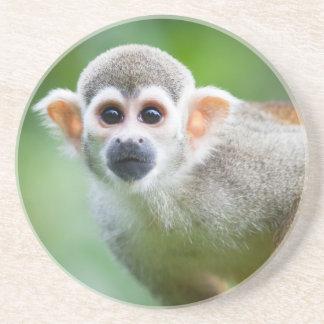 Primer de un mono de ardilla común posavasos diseño