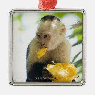 Primer de un mono del capuchón que come una fruta adorno navideño cuadrado de metal