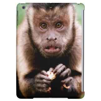 Primer de un mono negro-capsulado del capuchón