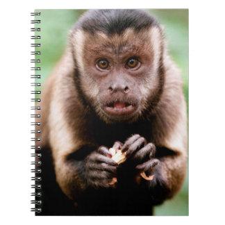 Primer de un mono negro-capsulado del capuchón libreta espiral