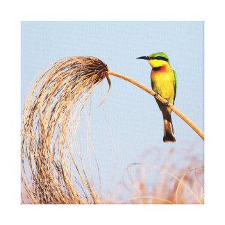 Primer de un pequeño pájaro del abeja-comedor impresión de lienzo