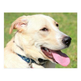 Primer de un perro blanco en mediados de bragas tarjeta postal