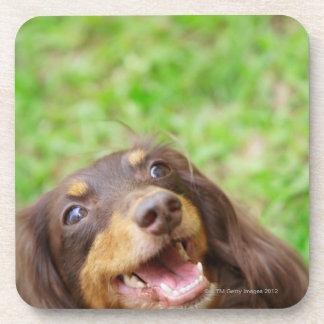 Primer de un perro del Dachshund Posavasos