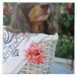 Primer de un perro del Dachshund que se sienta en  Tejas