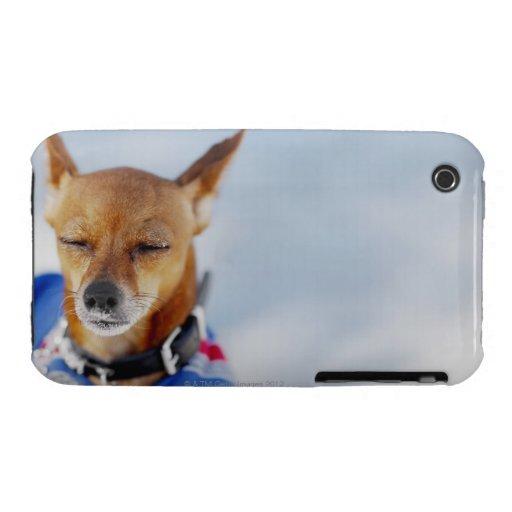 Primer de un perro iPhone 3 cárcasa