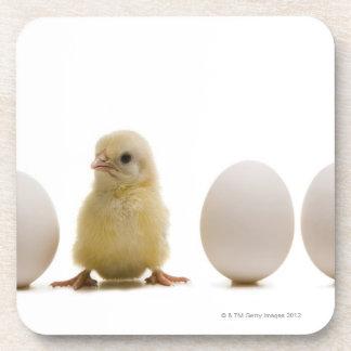 Primer de un polluelo del bebé con tres huevos posavasos de bebida