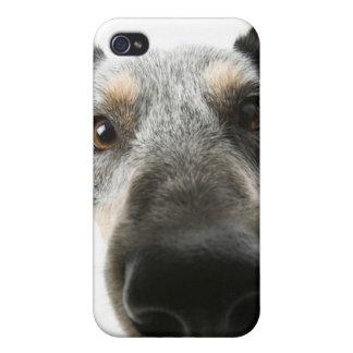 Primer de una cabeza de perro iPhone 4/4S carcasa