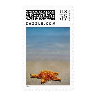 Primer de una estrella de mar del amortiguador timbres postales