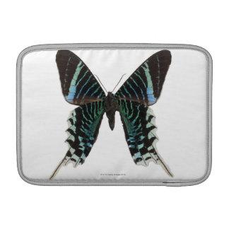 Primer de una mariposa fundas MacBook