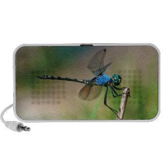 Primer de una mosca azul del dragón en una rama iPhone altavoz