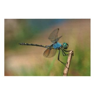 Primer de una mosca azul del dragón en una rama cuadros de madera