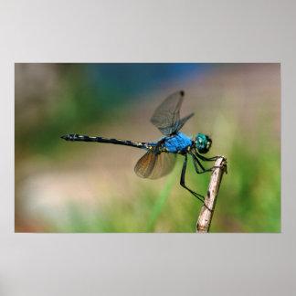 Primer de una mosca azul del dragón en una rama póster