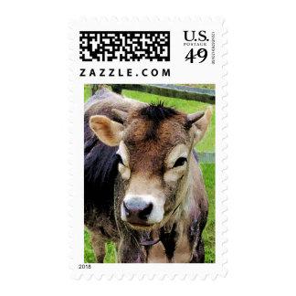 Primer del becerro timbres postales