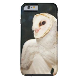 Primer del búho salvaje funda de iPhone 6 tough