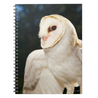 Primer del búho salvaje note book