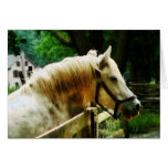 Primer del caballo blanco felicitación