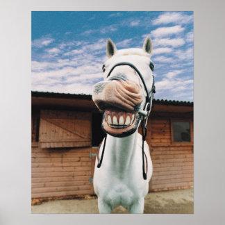Primer del caballo con la boca abierta posters