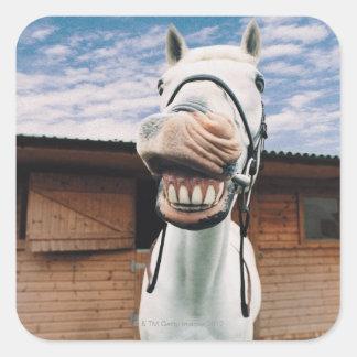 Primer del caballo con la boca abierta pegatina cuadrada