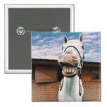 Primer del caballo con la boca abierta pin