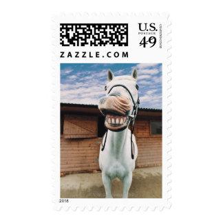 Primer del caballo con la boca abierta sellos