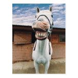 Primer del caballo con la boca abierta tarjeta postal