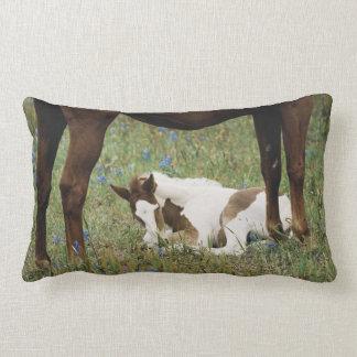 Primer del caballo y del potro del bebé almohada