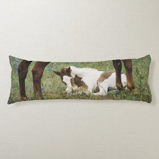 Primer del caballo y del potro del bebé cojin cama