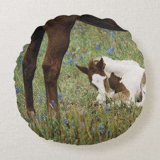 Primer del caballo y del potro del bebé cojín redondo