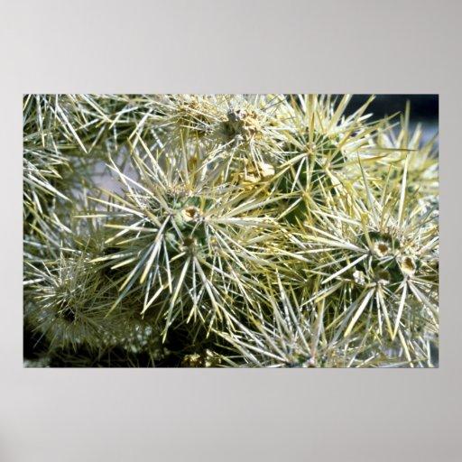 Primer del cactus impresiones