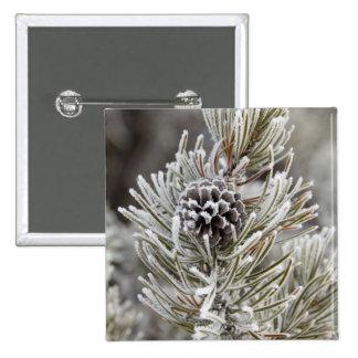 Primer del cono congelado del pino, Yellowstone Pin