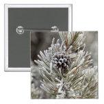 Primer del cono congelado del pino, Yellowstone Pins