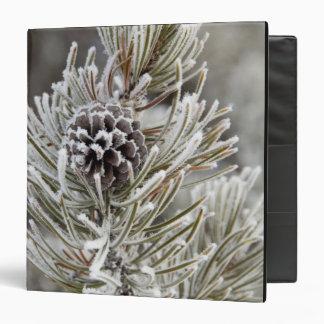 Primer del cono congelado del pino, Yellowstone
