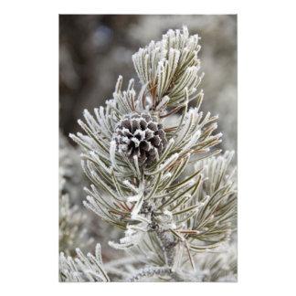 Primer del cono congelado del pino, Yellowstone Fotografía