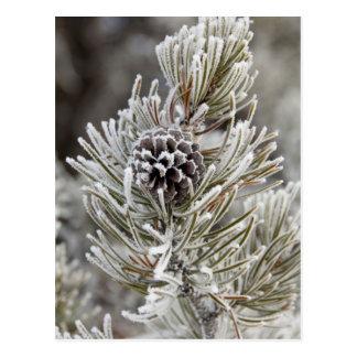 Primer del cono congelado del pino, Yellowstone Postal