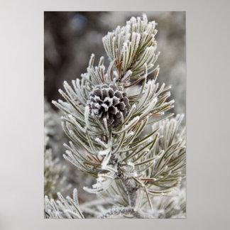 Primer del cono congelado del pino, Yellowstone Póster