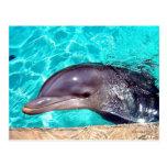 Primer del delfín