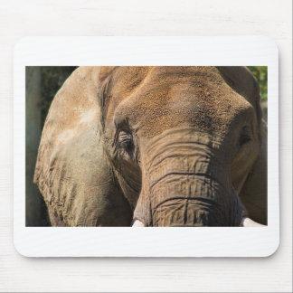 Primer del elefante el dormir mousepad