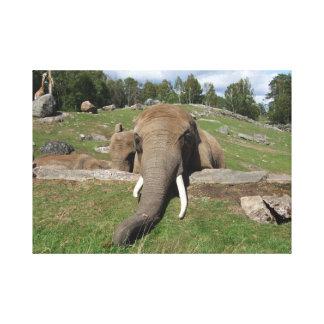 Primer del elefante impresiones en lienzo estiradas
