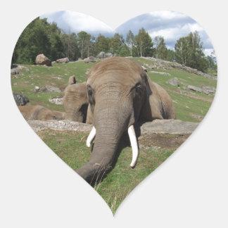 Primer del elefante pegatina en forma de corazón